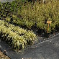 Boomkwekerij De Groene - Aarschot - Tuinaanleg