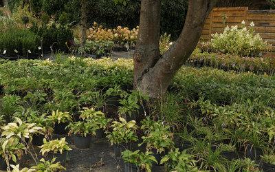 Boomkwekerij De Groene - Tuinaanleg
