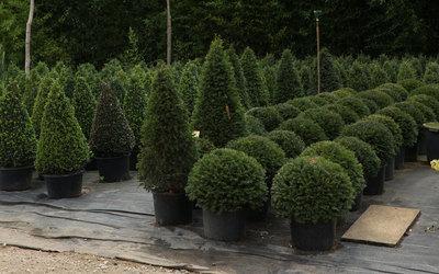 Boomkwekerij De Groene - Boom- en plantenkwekerij